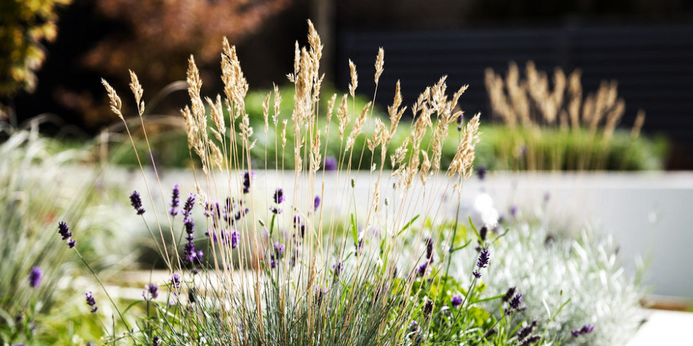 Landscaped_Area_Sample2